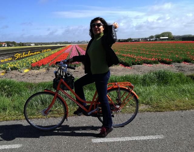 Hai pe bicicleta printre campurile de lalele de la Keukenhof, Olanda!